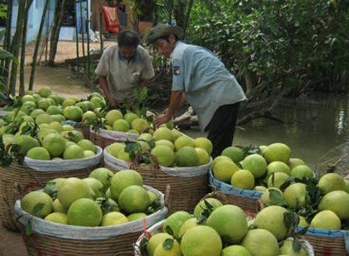 Những loại quả thuần Việt chính vụ vào mùa thu - Ảnh 1