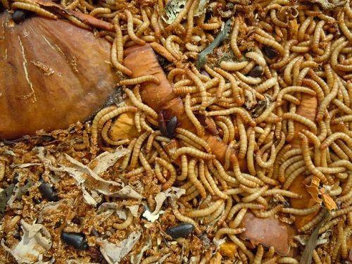 Kinh khủng cảnh buộc nhân viên bán hàng không đủ doanh số nuốt sâu bọ sống - Ảnh 1