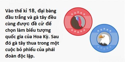 Điểm 10 sự kiện thú vị liên quan đến những chú gà tây dịp lễ Tạ Ơn - Ảnh 6