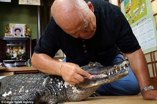 Cụ ông 65 tuổi nuôi cá sấu cưng, dắt đi dạo phố mỗi ngày - Ảnh 2