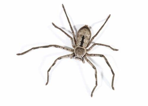 Phi cả xe ô tô xuống hồ chỉ vì một con nhện - Ảnh 2