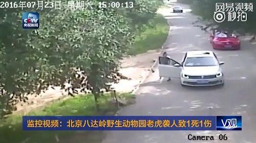 Một gia đình 4 người bị hổ tấn công ngay tại công viên - Ảnh 1