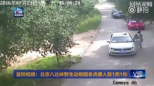 Một gia đình 4 người bị hổ tấn công ngay tại công viên - Ảnh 2
