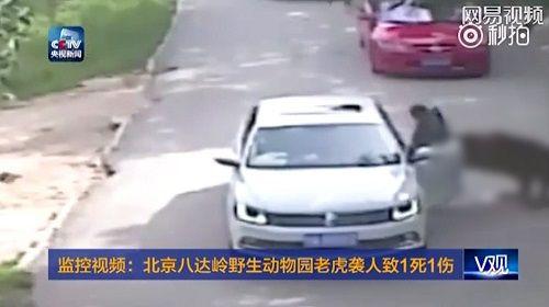 Một gia đình 4 người bị hổ tấn công ngay tại công viên - Ảnh 3