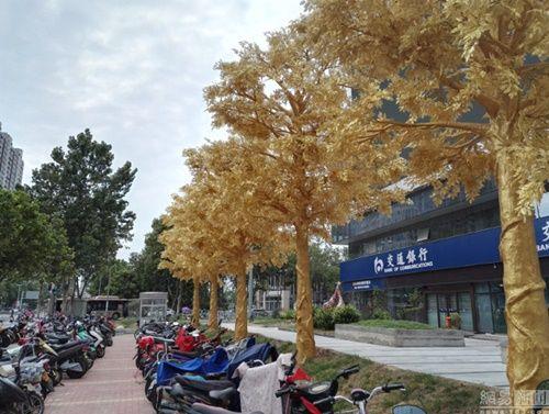 """""""Hoa mắt"""" ngắm hàng loạt """"cây vàng"""" được trồng trước cửa ngân hàng  - Ảnh 2"""