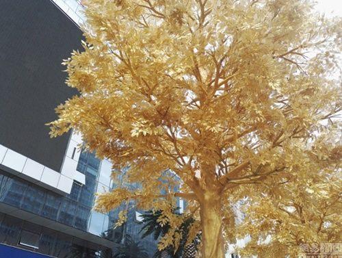 """""""Hoa mắt"""" ngắm hàng loạt """"cây vàng"""" được trồng trước cửa ngân hàng  - Ảnh 3"""