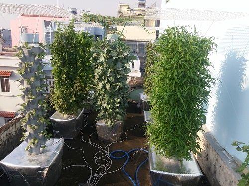 Ông bố Sài thành trồng rau sạch kiểu mới - vừa nhiều mà chẳng tốn diện tích - Ảnh 3