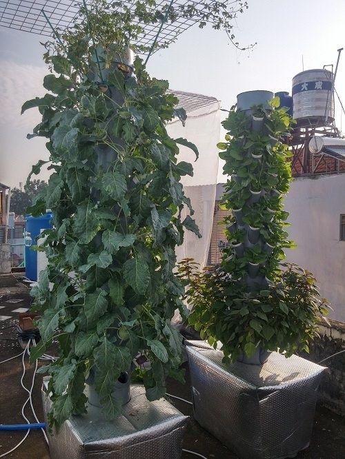 Ông bố Sài thành trồng rau sạch kiểu mới - vừa nhiều mà chẳng tốn diện tích - Ảnh 4