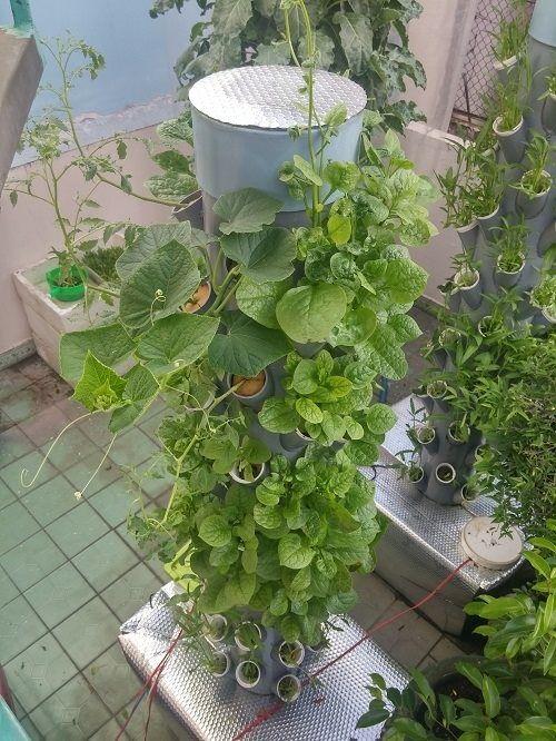 Ông bố Sài thành trồng rau sạch kiểu mới - vừa nhiều mà chẳng tốn diện tích - Ảnh 5
