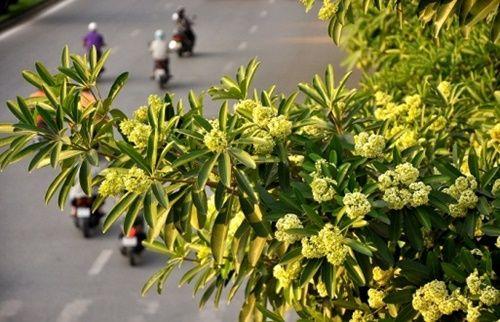 Những loài hoa 'gọi' mùa thu về - Ảnh 1