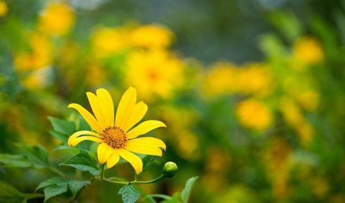 Những loài hoa 'gọi' mùa thu về - Ảnh 6