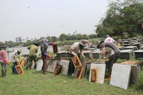 Bóc mẽ chiêu làm giả mật ong từ… đường và nước lã - Ảnh 2