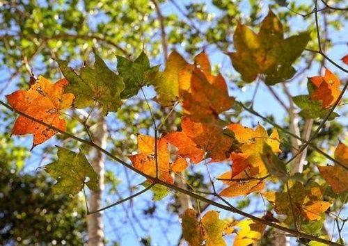 Những điểm đến tuyệt đẹp trong tháng 9 - Ảnh 7