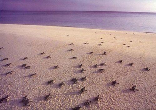 6 điều thú vị nên trải nghiệm khi lần đầu đến Côn Đảo - Ảnh 8