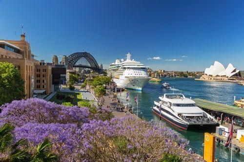 Ngắm hoa phượng tím đẹp nao lòng ở thành phố Sydney - Ảnh 1