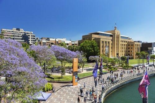 Ngắm hoa phượng tím đẹp nao lòng ở thành phố Sydney - Ảnh 3
