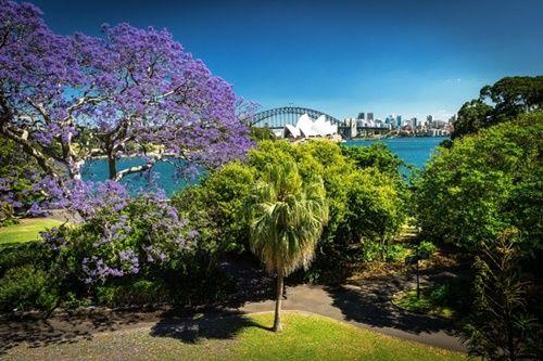 Ngắm hoa phượng tím đẹp nao lòng ở thành phố Sydney - Ảnh 8