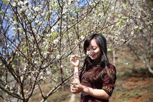 Khách du lịch đổ xô tới Mộc Châu ngắm hoa mơ, hoa mận nở - Ảnh 3
