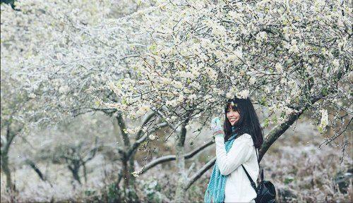 Khách du lịch đổ xô tới Mộc Châu ngắm hoa mơ, hoa mận nở - Ảnh 7