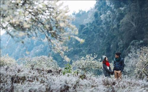 Khách du lịch đổ xô tới Mộc Châu ngắm hoa mơ, hoa mận nở - Ảnh 8