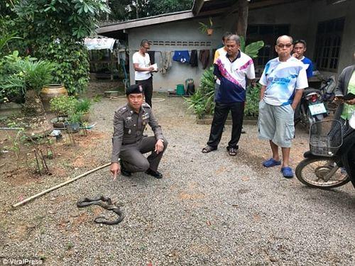 Bé gái 9 tuổi chết sau khi bị rắn hổ mang cắn lúc đang ngủ - Ảnh 3
