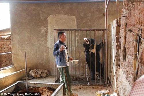 Ông chủ sửng sốt khi phát hiện chú cún nuôi trong nhà là con gấu đen quí hiếm - Ảnh 4