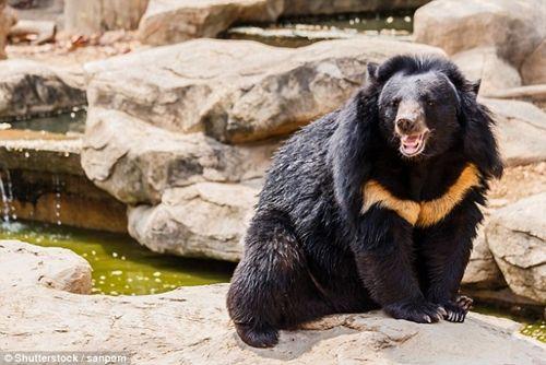 Ông chủ sửng sốt khi phát hiện chú cún nuôi trong nhà là con gấu đen quí hiếm - Ảnh 5