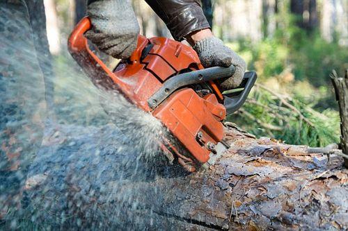 Thợ làm vườn chết lơ lửng trên cây vì cắt trúng cuống họng - Ảnh 1