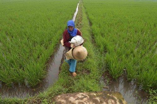 Indonesia có thể làm sạch con sông bẩn nhất thế giới? - Ảnh 1