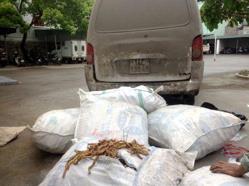 Gần nửa tấn ba kích không rõ nguồn gốc từ Trung Quốc: Dùng trộn vào ba kích Quảng Ninh để bán - Ảnh 1