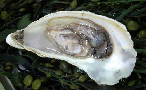 Ăn hàu sống: Cẩn trọng mắc bệnh truyền nhiễm  - Ảnh 2