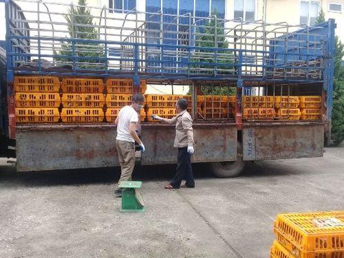 Tiêu hủy 1,1 tấn gà lậu Trung Quốc  - Ảnh 1