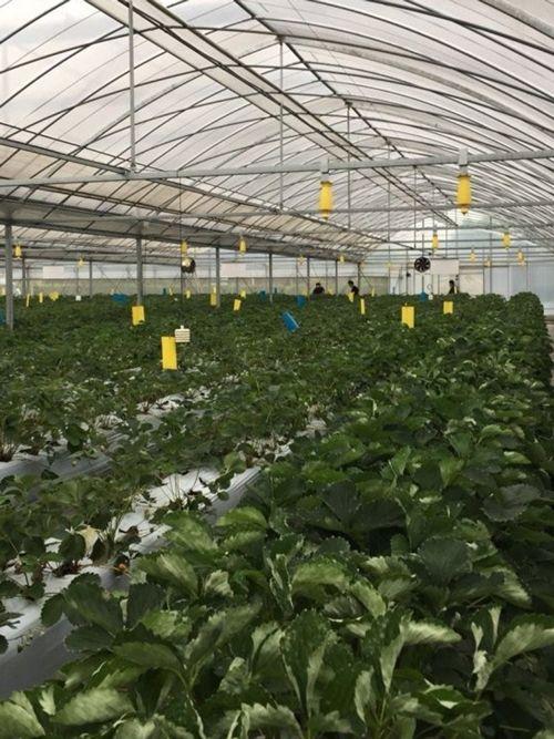 Trồng cây bằng điện, giải pháp nông nghiệp sạch mới - Ảnh 3