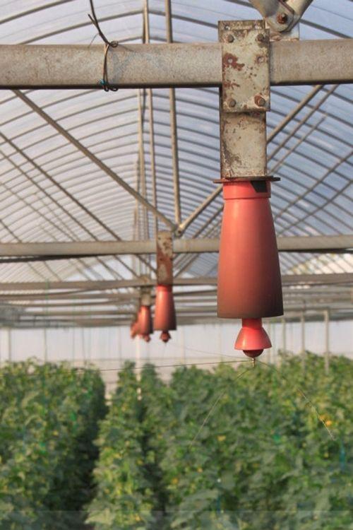 Trồng cây bằng điện, giải pháp nông nghiệp sạch mới - Ảnh 4