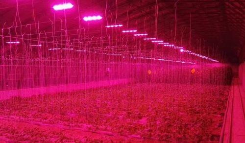 Trồng cây bằng điện, giải pháp nông nghiệp sạch mới - Ảnh 5