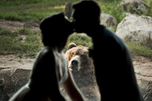 """Cười """"ngả nghiêng"""" với chú gấu sáng chiếm trọn tâm điểm của cô dâu chú rể - Ảnh 1"""