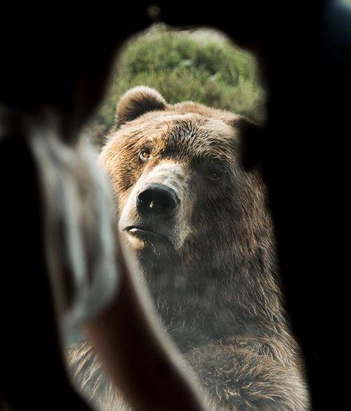 """Cười """"ngả nghiêng"""" với chú gấu sáng chiếm trọn tâm điểm của cô dâu chú rể - Ảnh 3"""