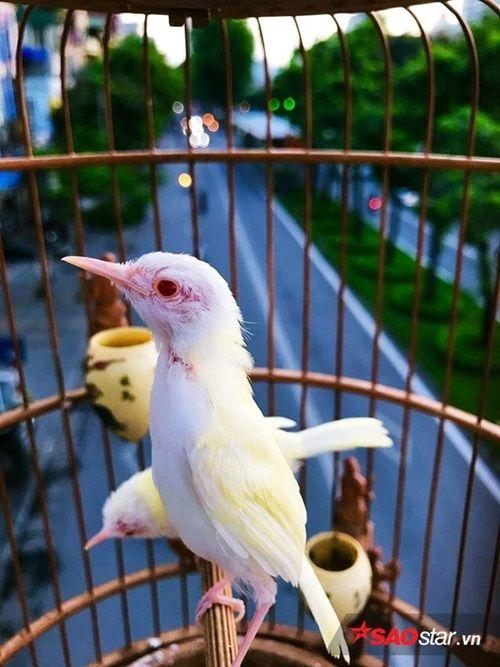 """Cận cảnh bộ sưu tập chim đột biến gien tiền tỷ quý hiếm của ông """"vua chim màu"""" - Ảnh 2"""