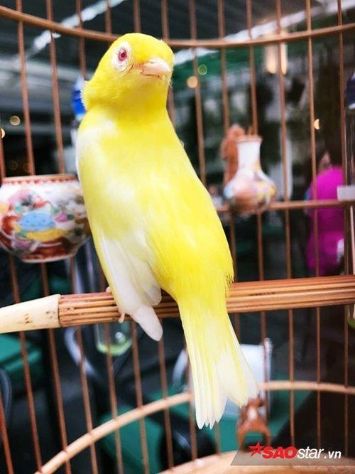 """Cận cảnh bộ sưu tập chim đột biến gien tiền tỷ quý hiếm của ông """"vua chim màu"""" - Ảnh 6"""