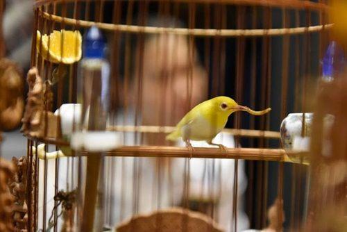 """Cận cảnh bộ sưu tập chim đột biến gien tiền tỷ quý hiếm của ông """"vua chim màu"""" - Ảnh 8"""