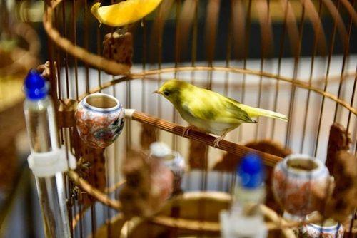 """Cận cảnh bộ sưu tập chim đột biến gien tiền tỷ quý hiếm của ông """"vua chim màu"""" - Ảnh 9"""