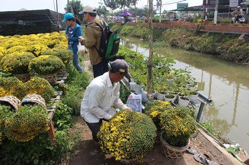Sa Đéc: Hoa Tết tăng giá, người trồng phấn khởi vì trúng đậm - Ảnh 1