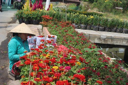 Sa Đéc: Hoa Tết tăng giá, người trồng phấn khởi vì trúng đậm - Ảnh 2