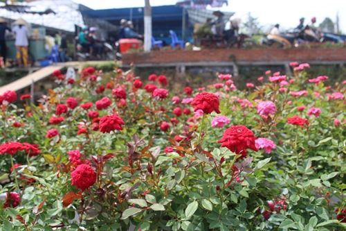 Sa Đéc: Hoa Tết tăng giá, người trồng phấn khởi vì trúng đậm - Ảnh 5
