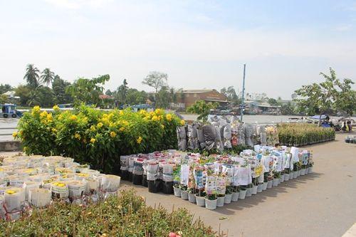Sa Đéc: Hoa Tết tăng giá, người trồng phấn khởi vì trúng đậm - Ảnh 6