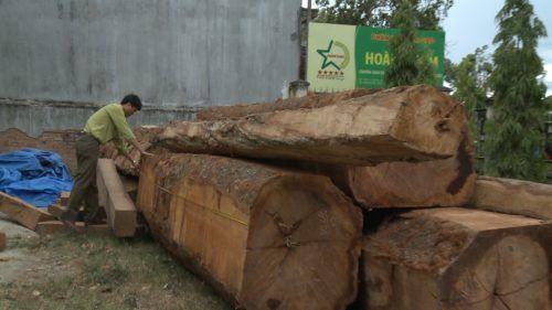 Phát hiện bãi gỗ lớn giấu gần kho doanh nghiệp ở Kon Tum - Ảnh 2