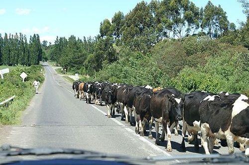 Các quy định tham gia giao thông kỳ lạ trên thế giới - Ảnh 7