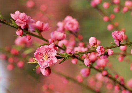 Những loài hoa đẹp và ý nghĩa không phải ai cũng biết trong ngày Tết - Ảnh 1