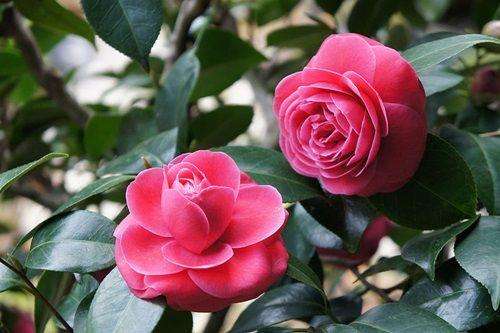 Những loài hoa đẹp và ý nghĩa không phải ai cũng biết trong ngày Tết - Ảnh 5