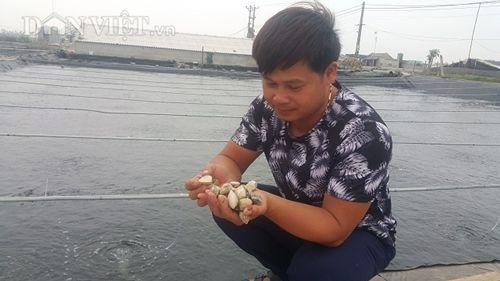 Nhờ nuôi ngao sinh sản mà mỗi tháng gia đình anh Phạm Văn Kim bỏ túi hơn 200 triệu đồng. Ảnh: Dân việt